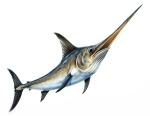 pește spadă